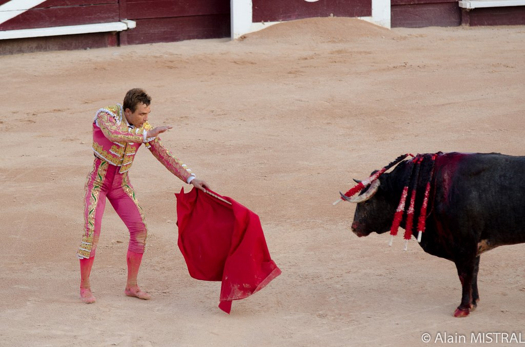 Indulto au toro de la Quinta