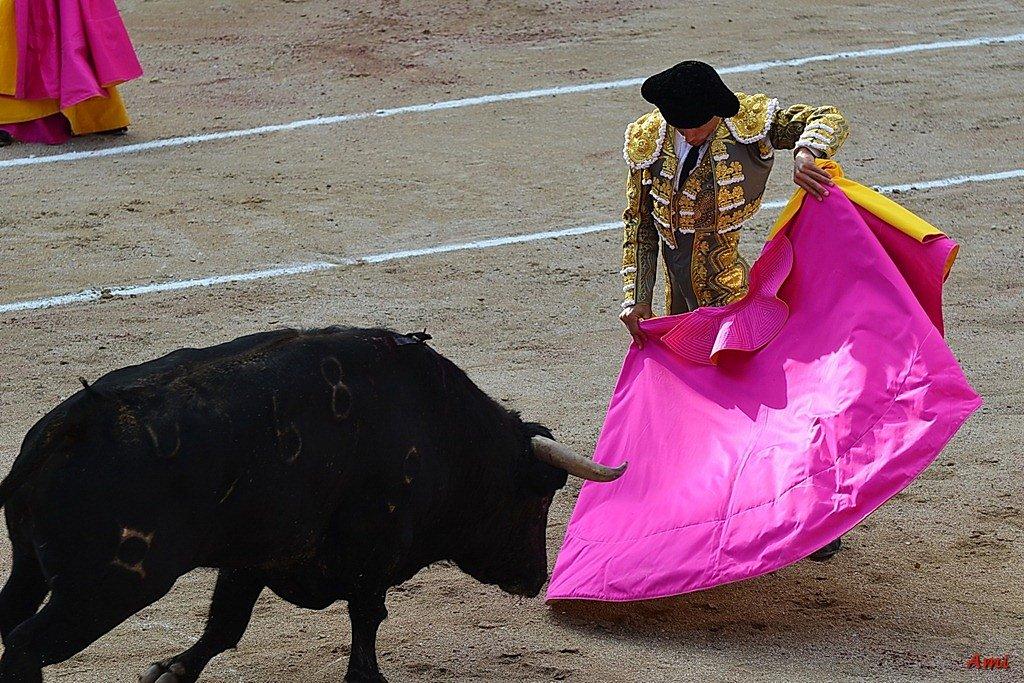 Feria-2012-Corrida-Vendredi-DSC-9818.jpg