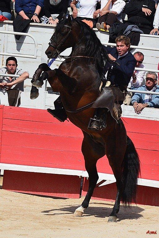 Feria-Arles-2012-DSC-1203.jpg