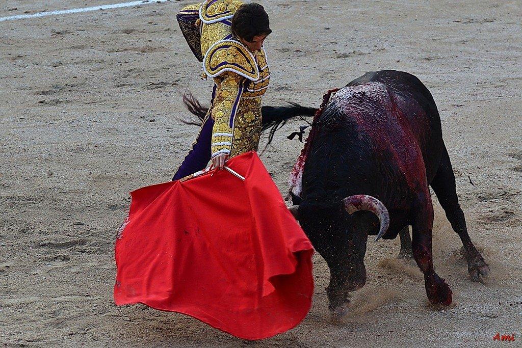 Feria-2012-Corrida-Vendredi-DSC-9998.jpg