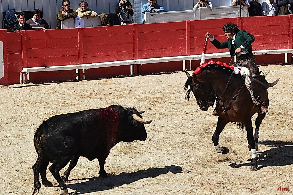 Feria-Arles-2012-DSC-1266.jpg